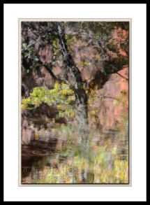 reflection-west-fork-2980