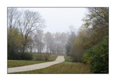 fog-autumn-trees-path-TJB2203