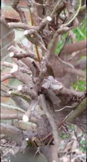 tree roots1