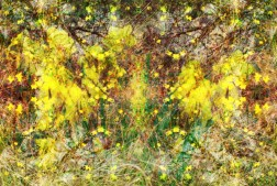 ethereal daffodils 1