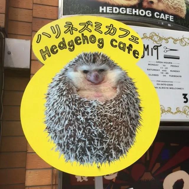 HArry's Hedgehog Cafe in Harajuku, Toklyo