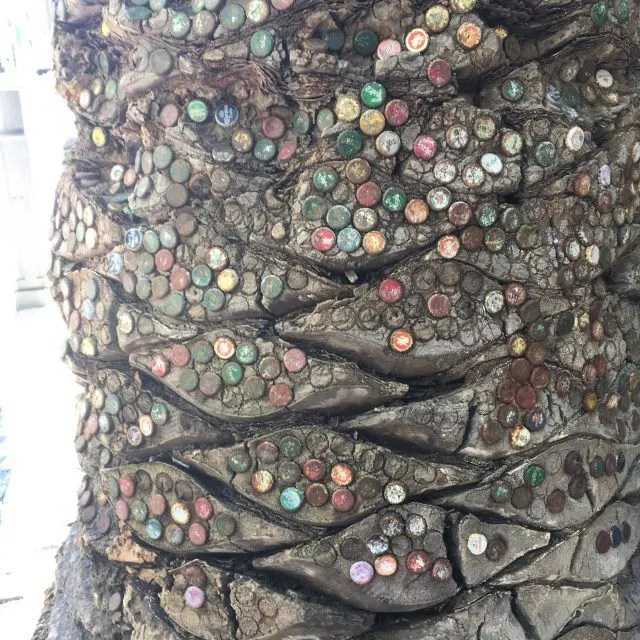 This tree in the middle of Perth makes it into my list of top things to do as it's studded with old bottle tops, but just keeps on growing.