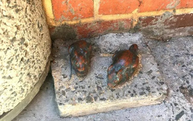 Every day thousands of people walk past this tiny statue of mice in Perth. I wonder how many even know they are there. I found it thanks to the Oh Hey WA walking tour