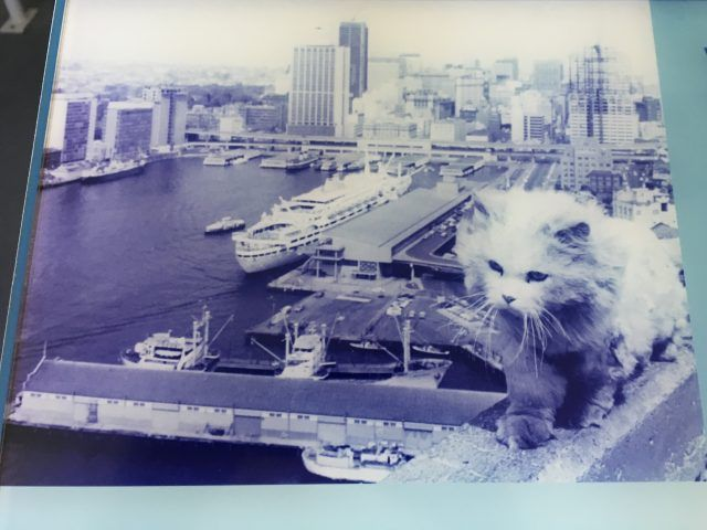 Did you know there used to be a group of cats who lived on Sydney Harbour Bridge? Here's the story