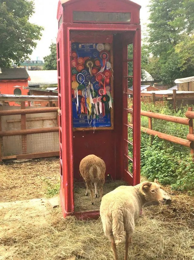 Goats in a phonebox - how can this not be in your list of cute things to do in London? Find them at Spitalfields Farm in the middle of London's East End.