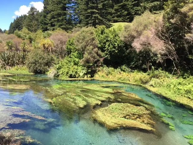 The Putaruru Blue Spring in New Zealand's North Island is a stunning bright blue pool and river - and it makes an easy day trip from Auckland.