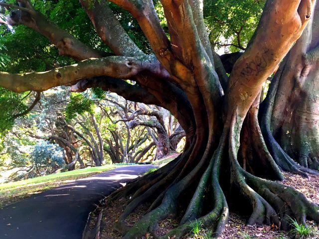 The trees in Auckland's Albert Park are stunning. Add visiting them to your list of things to do in Auckland.