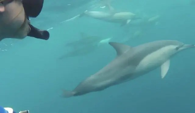 Where can you swim with dolphins near Sydney? Nelson Bay is the answer - with Dolphin Swim Australia's ethical dolphin tours