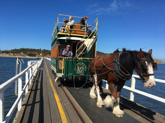 The Horse Drawn Carriage is one of the main attractions on Granite Island near Victor Harbor.