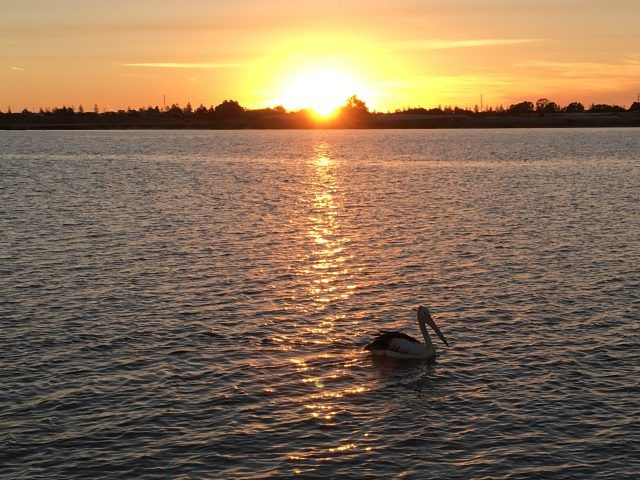 Port Adelaide has its own pod of dolphins that live in the nearby Port River - spotting them is one of the fun things to do in the city.
