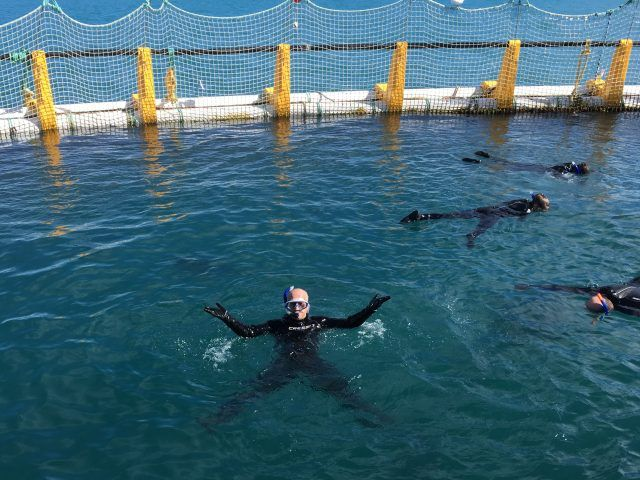 Swimming with tuna at Oceanic Victor, South Australia