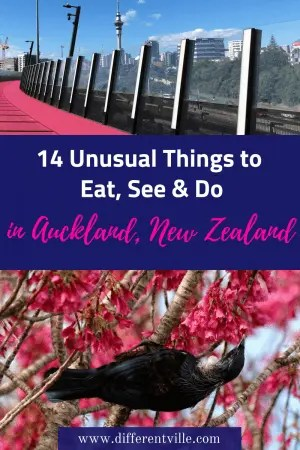Planning a trip to New Zealand? We've got the best ideas of some more unusual things to do in Auckland. There's street art in Auckland, the best burger in Auckland and some amazing sights to see in Auckland. #auckland #newzealand #thingstodoinnewzealand birdimage -pixabay