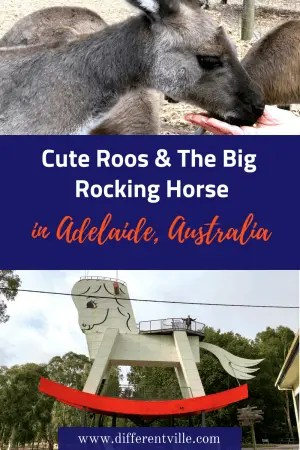 Australia is famous for it's 'big things' and The big Rocking Horse near Adelaide is the biggest in the world., And you can climb it. Plus, there's some super cute kangaroos too. #thingstodoinadelaide #australianbigthings #thebigrockinghorse
