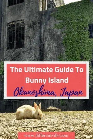Just off the south coast of Japan, a day trip from Kyoto, Osaka or Hiroshima likes Okunoshima or Bunny Island where over 1000 bunnies are waiting for you to bring them snacks. Here's everything you need to know if you want to visit. Click to read it now, or save to one of your boards for later. #japan #bunnyisland #thingstodoinjapan #cutethingstodoinjapan