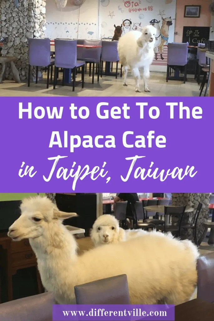 If you're looking for something unique things to do in Taipei, you might want to add visiting the Alpaca Cafe to your list. Also known as Oia Art Cafe here's how to get there and what you might see. Click to read it now or add it to your Taipei board for later. #taipei #thingstodointaipei #alpacacafe #alpaca #taipeicafes