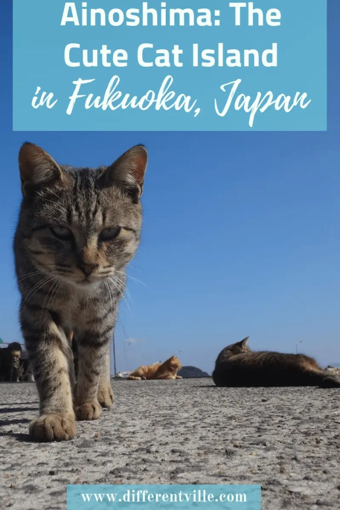 Ainoshima island near Fukuoka, Japan is one of Japan's 11 cat islands. If you're planning a trip to Fukuoka, it's a short trip by ferry. Click here to read how to get to Ainoshima Cat Island, or save it to your Fukuoka or Japan boards for latr. #ainoshima #catisland #fukuoka #fukuokatravelguide #kyushu