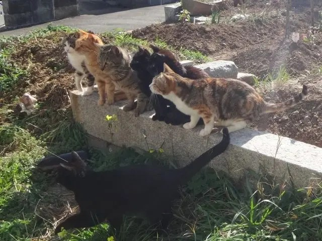 Cats on Ainoshima Island, Fukuoka. 150 cats live here which is why it's also known as Cat Heaven Island.