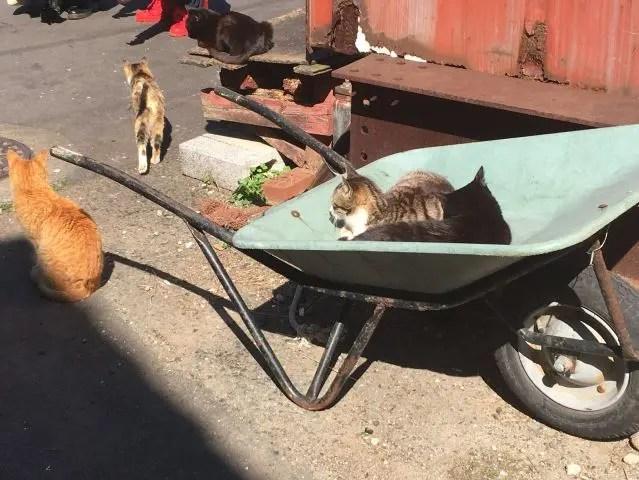 150 cats live on Ainoshima, aka Cat Heaven Island close to Fukuoka, Japan