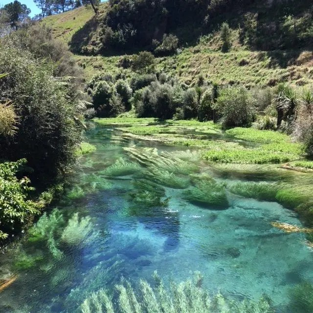 Bright blue pool surrounded by ferns at the Blue Spring Putaruru, New Zealand