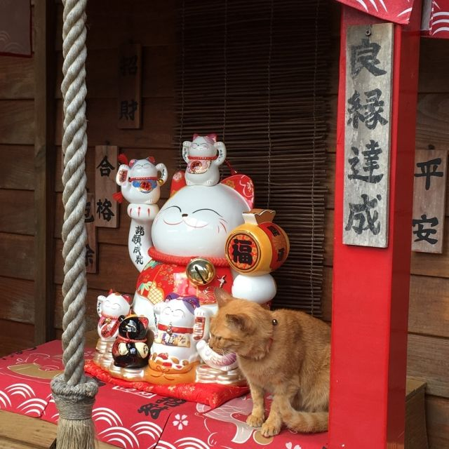 CAt sitting on a shrine at Houtong Cat Village, Taipei, Taiwan