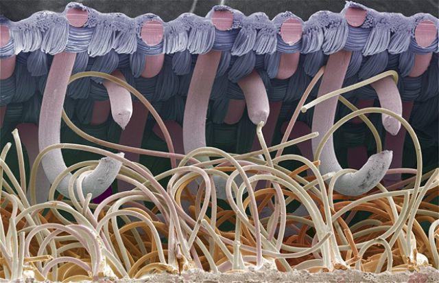 Mira como lucen estas 21 cosas comunes vistas desde un microscopio Es impresionante  DifundirORG