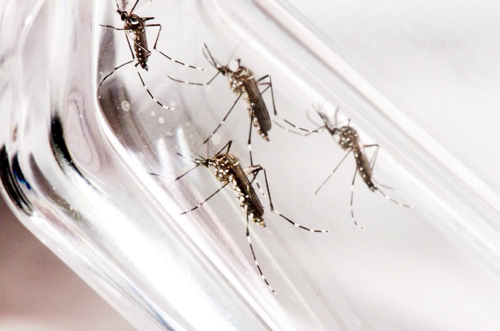 Com mais de 1600 casos positivos de dengue, nível de contaminação de Assis ainda preocupa autoridades