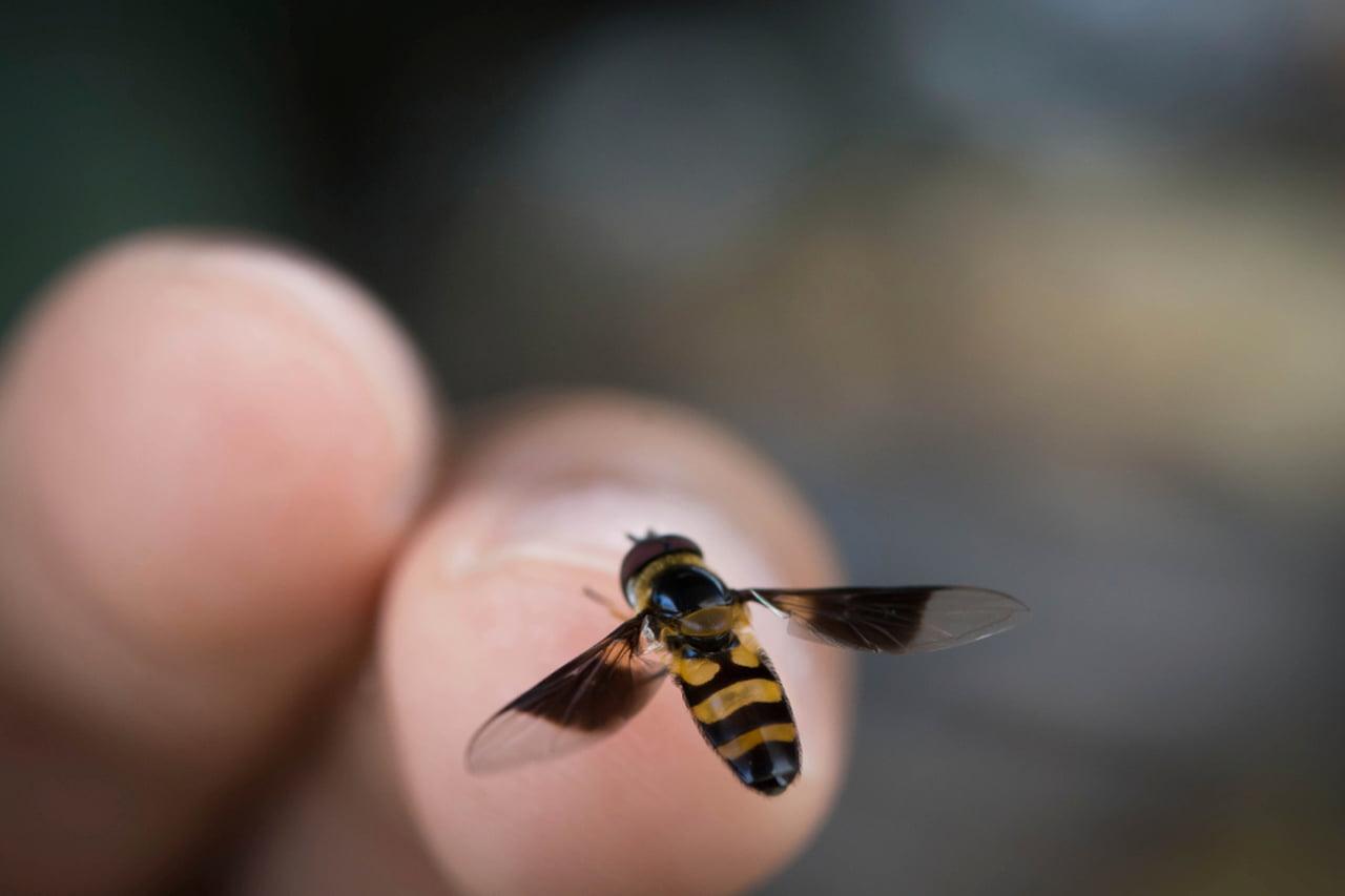 Cresce número de acidentes com abelhas na área urbana neste período do ano