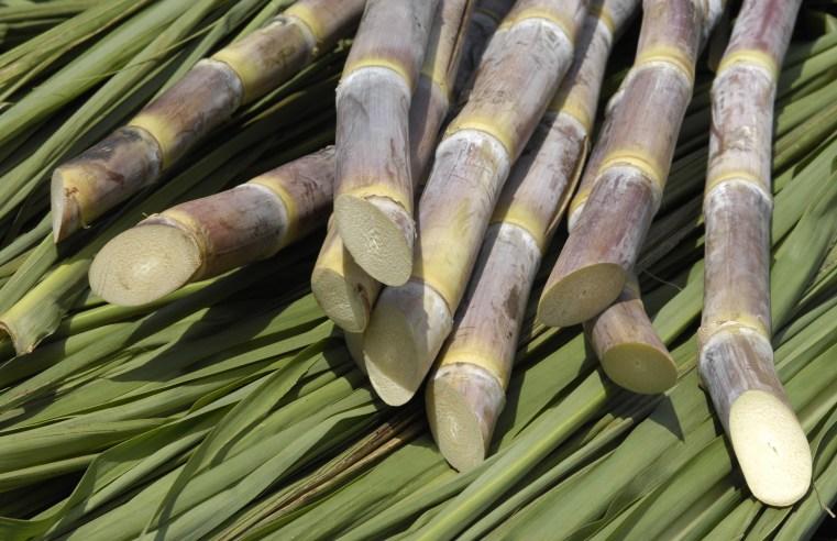 Prefeitura de Tarumã oferece curso técnico de açúcar e álcool