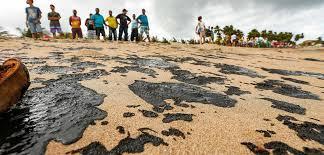 Derramamento de óleo causa prejuízos em ecossistema marinho