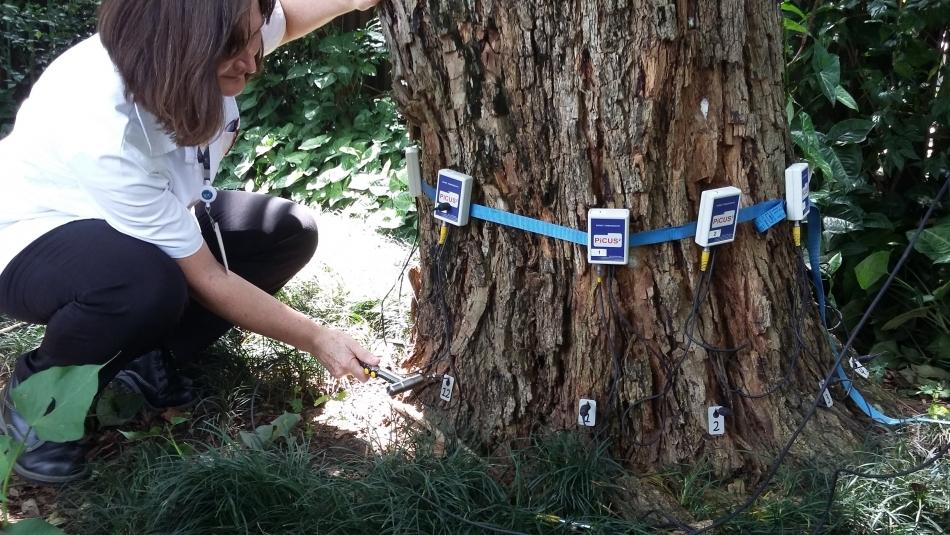 Com o apoio do Instituto de Pesquisas Técnológicas, secretaria de Meio Ambiente pretende mapear as árvores de Assis