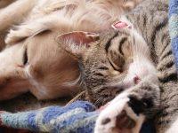 Veterinário afirma que cães e gatos não podem ser infectados e não podem transmitir o coronavírus