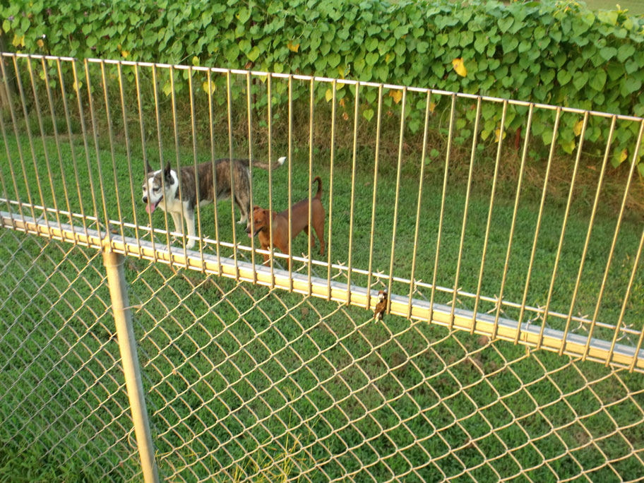 Image Result For Foot Chain Link Fence