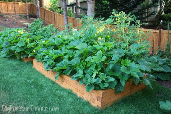 raised garden beds in grass