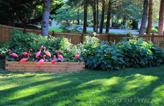raised garden beds for growing vegetables