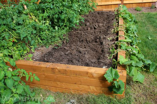 raised garden beds in kitchen garden