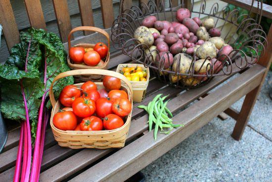 organic gardening harvest