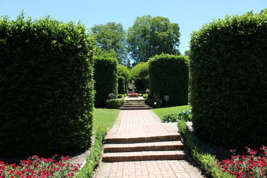 large boxwood hedges