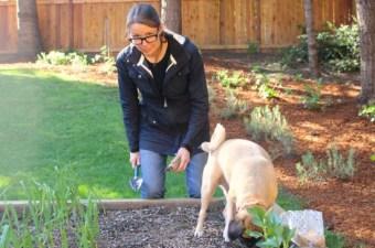 A Week in Garden Photos – April 17th- 23rd