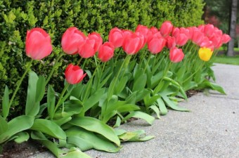 A Week in Garden Photos – April 24-th 30th