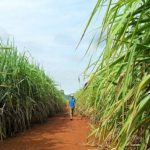 Zambia Sugar employee gets 4 years for corrupt practices