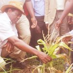 UPND leader Hakainde Hichilema when he inspected maize fields in Katuba in 2018