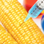 Biosafety authority seizes GMO foods from Food Lovers, Spar