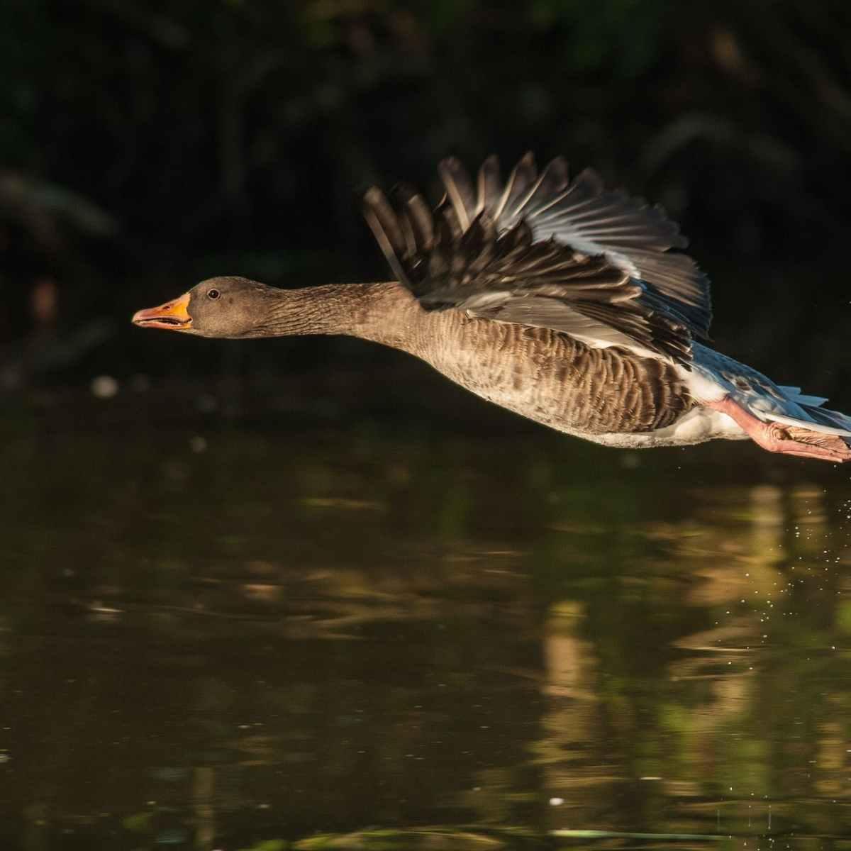 nature bird water animal