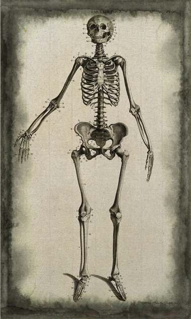 Skeleton of a woman anterior view. Line engraving by A. Bell after J.-J. Sue, 1798..