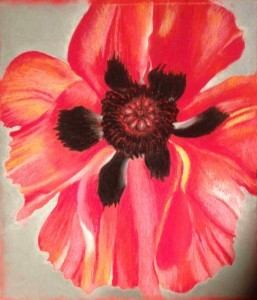 Maichack's poppy