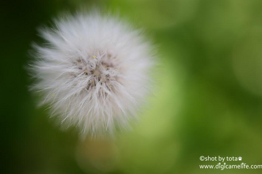 ふわふわの花