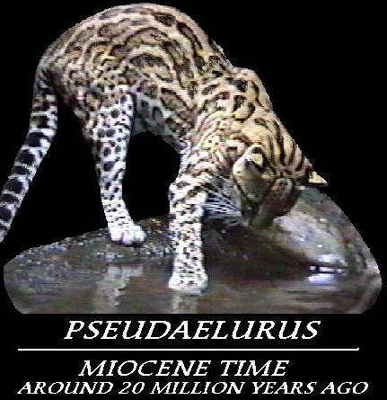gatto primitivo
