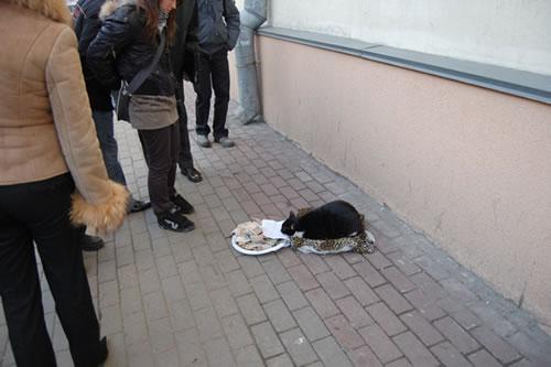 物乞いをする猫。しかもけっこう貯まってる