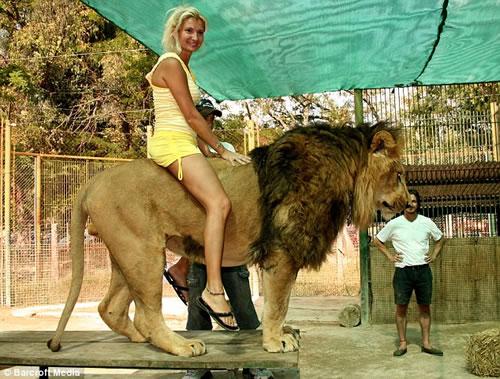 ライオンやトラに触れるアルゼンチンのルーハン動物園。「ただし食べられても責任は取りません」