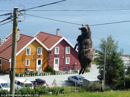 どうしてこうなった!? 電線に角がひっかかり宙吊り状態になった羊